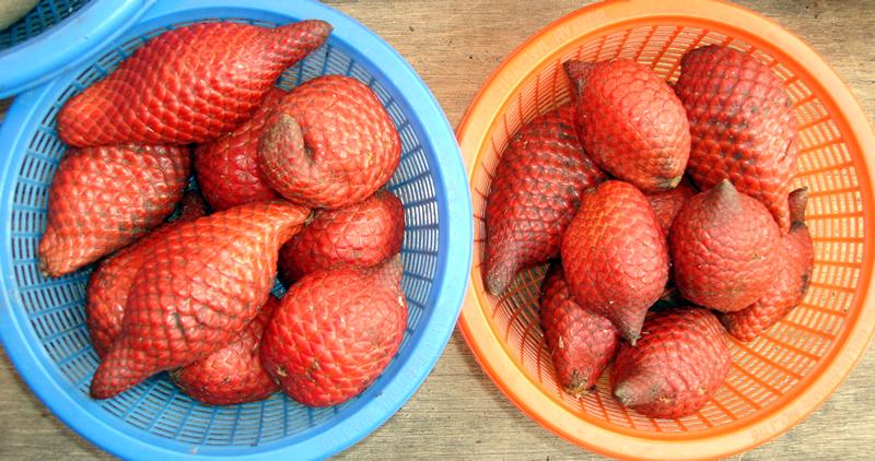 rote frucht wächst am baum